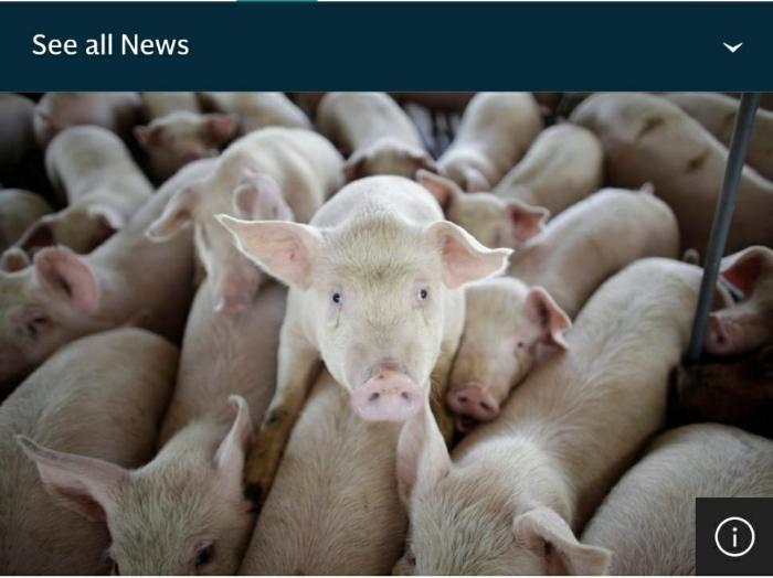 新型G4猪流感_G4猪流感_新型猪流感_变异猪流感_舆情热点