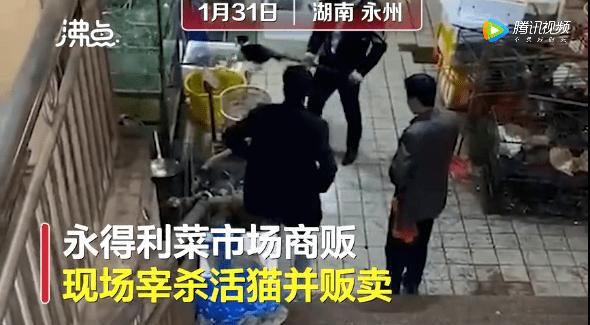 「舆情热点」湖南永州宰活猫售卖 最新回应