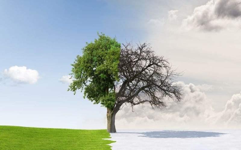 人要像树沉默而奉献着-【寓言故事】