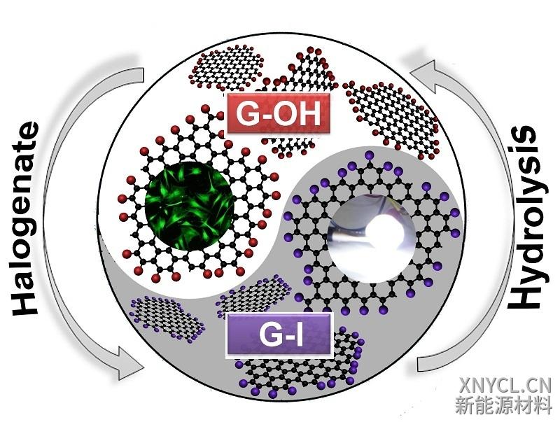 抗菌抗病毒石墨烯材料对脂肪干细胞增殖的促进