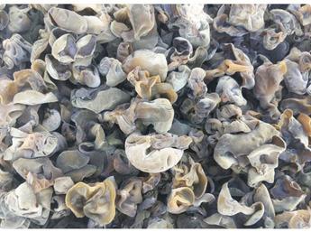 贵州生态黑木耳 公司自有基地生产 大货直供