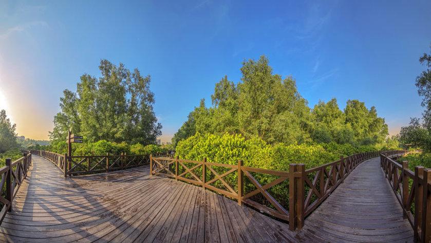 红树林公园休闲栈道
