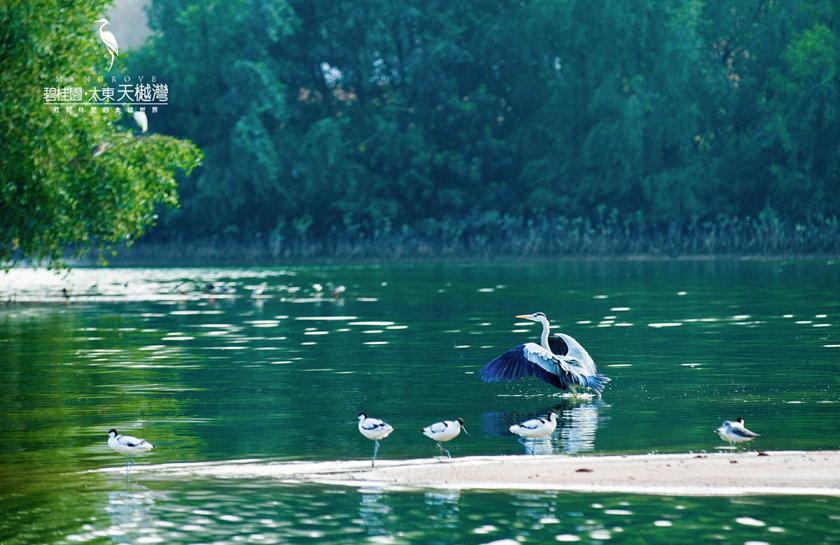 国家4A景区大亚湾红树林湿地公园实拍照片