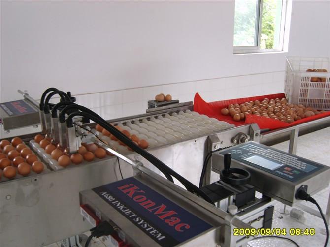 5頭雞蛋噴碼機(清洗)_副本