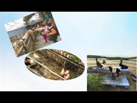 深圳亲子一日游—农耕体验+挖红薯+抓泥鳅+磨豆浆+CS野战田园亲子方案