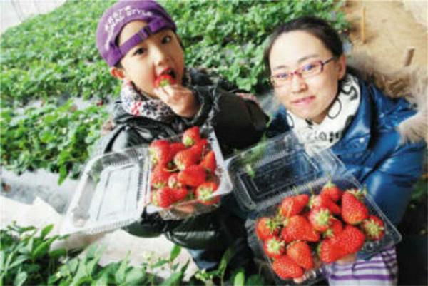亲子草莓采摘活动