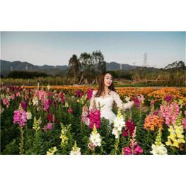 深圳鹏城美丽乡村生态园怎么走|门票|有什么好玩的?