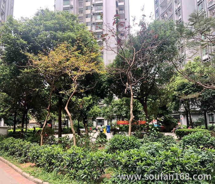 深圳市沙井小产权房网西荟花园十七栋花园小区房
