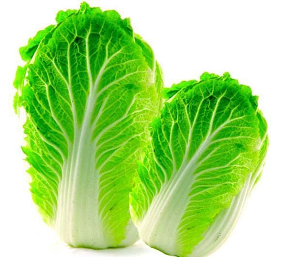 白菜1807