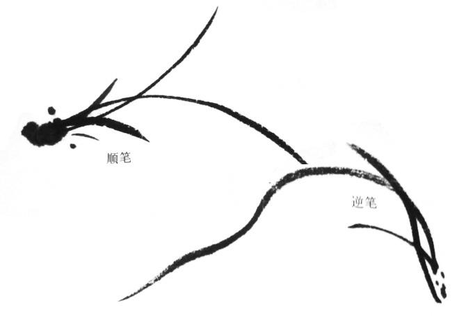 国画兰花的画法兰叶