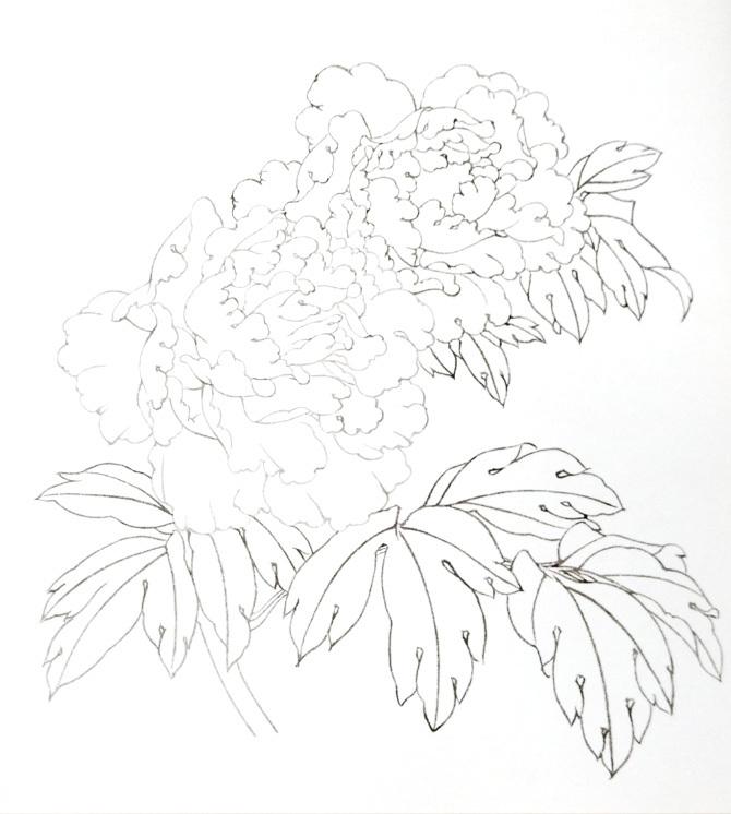 牡丹花的画法步骤1
