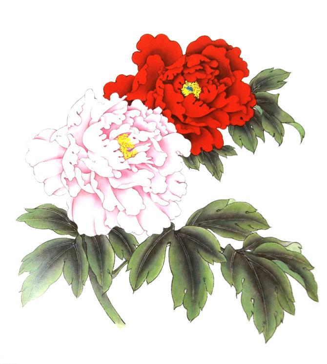 牡丹花的画法步骤4