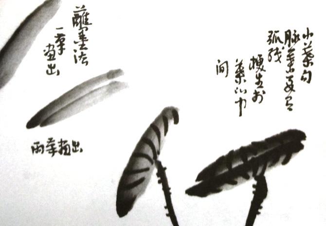 水墨画小荷叶绘画技法