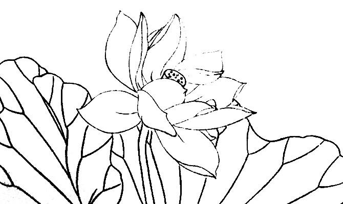 工笔花鸟画法-1