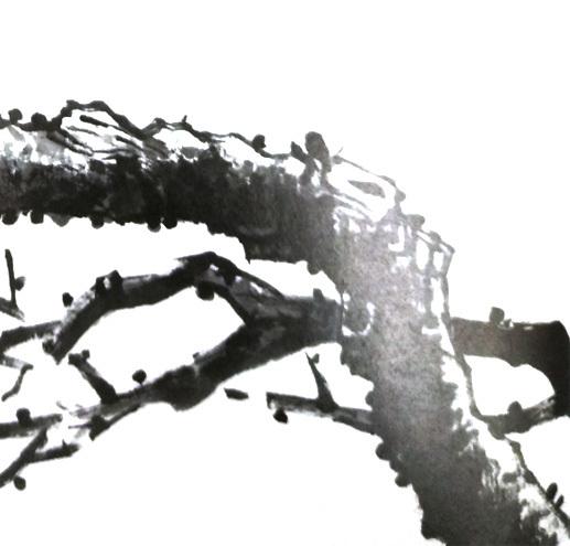 写意梅花用什么颜色—梅花枝干的画法01