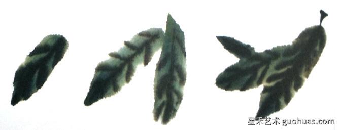 枇把叶子的画法