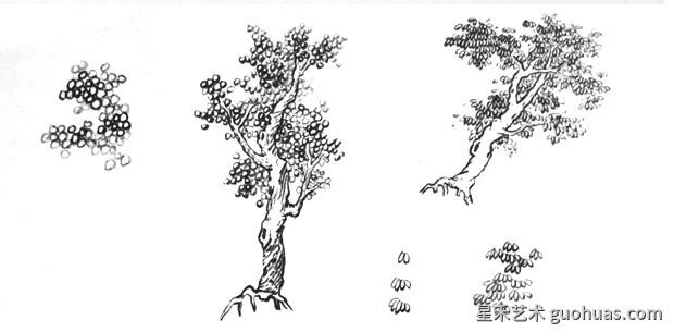 树叶的画法-夹叶的画法