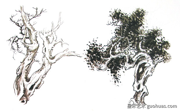 柏树的画法
