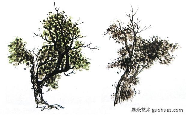 柏树的画法-01