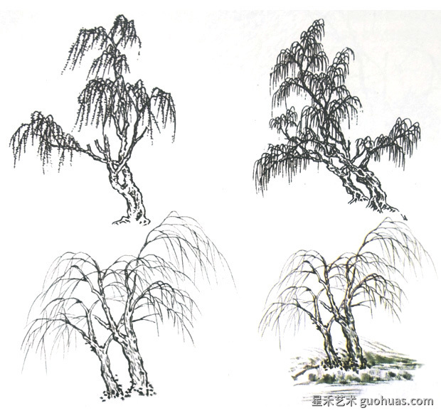 杨柳的画法示范图