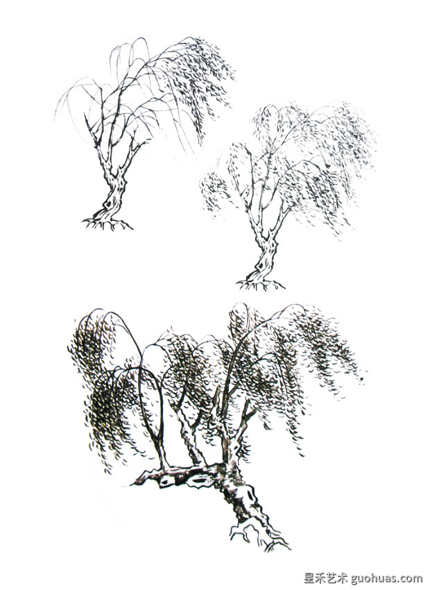 杨柳的画法示范图-01