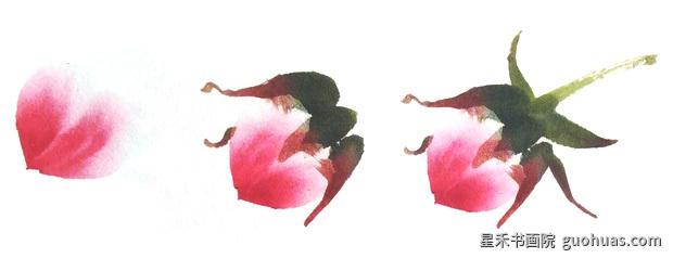 写意中国画牡丹花苞的基本画法