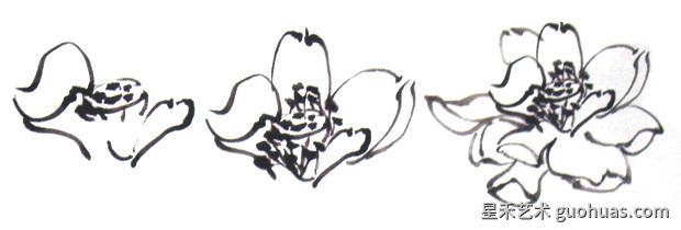 荷花写意国画花头的基本画法