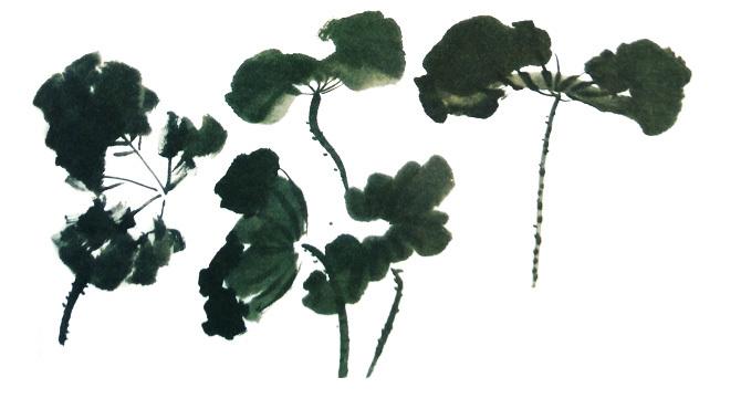 荷花写意水墨画花叶的画法