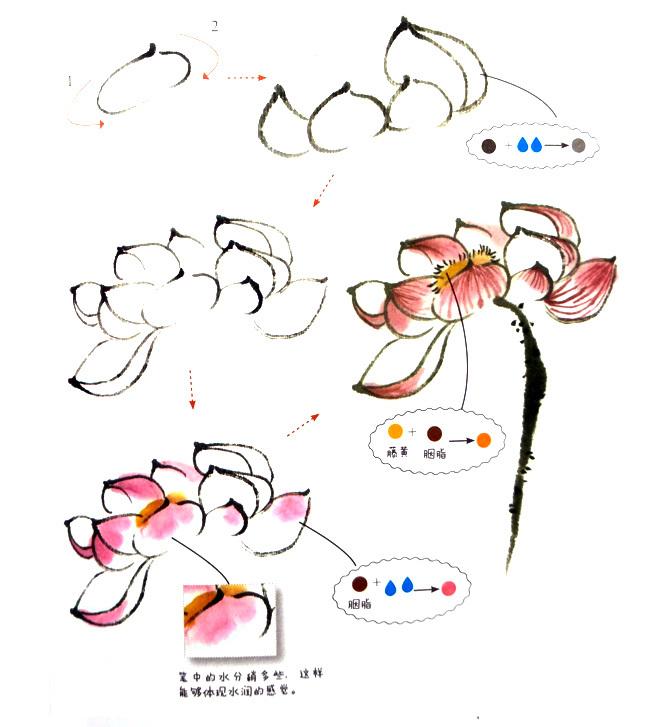 写意中国画荷花瓣的画法