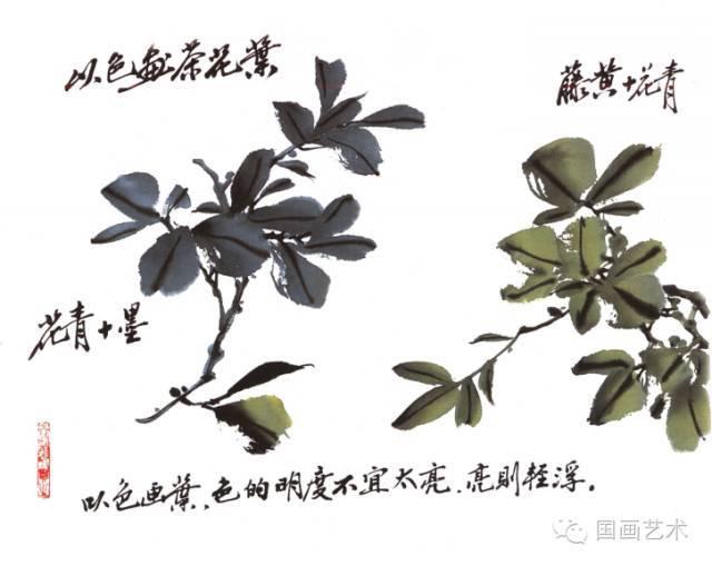怎么画茶花之叶的画法2