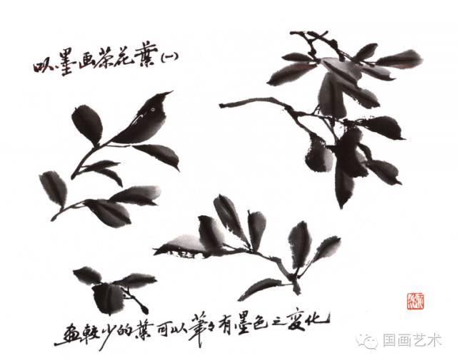 怎么画茶花之叶的画法
