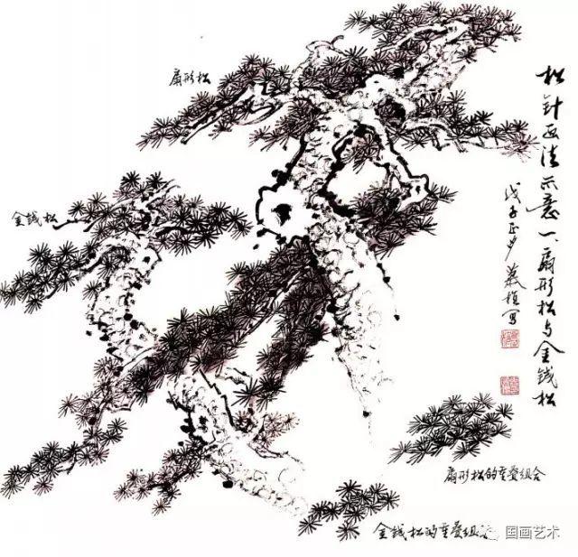 松树的画法-6