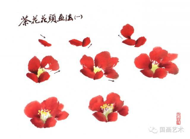 怎么画茶花之花头的画法蓬