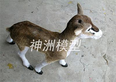 动物模型6