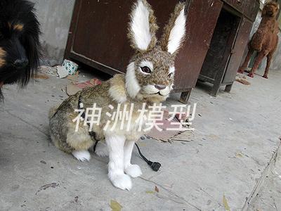 动物模型7