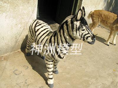动物模型10