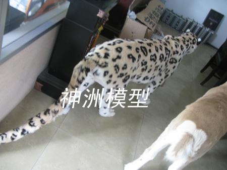 动物模型49