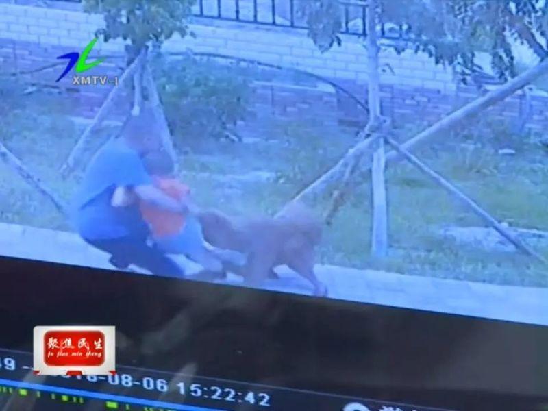 小区监控视频抓拍到大型犬咬伤孩子画面