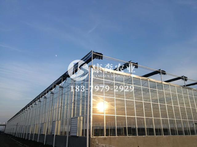 农业设施为什么越来越喜欢用温室大棚