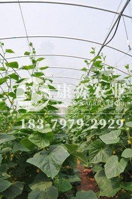 大棚种植黄瓜一亩一年有多少产量   种几次  一次大概多少产量?