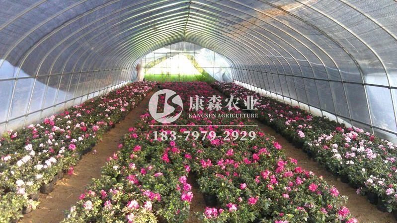 花卉温室大棚定制建造