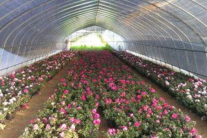 花卉单体温室大棚定制建造