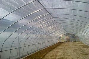 插地式单栋薄膜蔬菜温室大棚