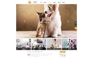 扬中网站建设—动物美容医院网站设计案例