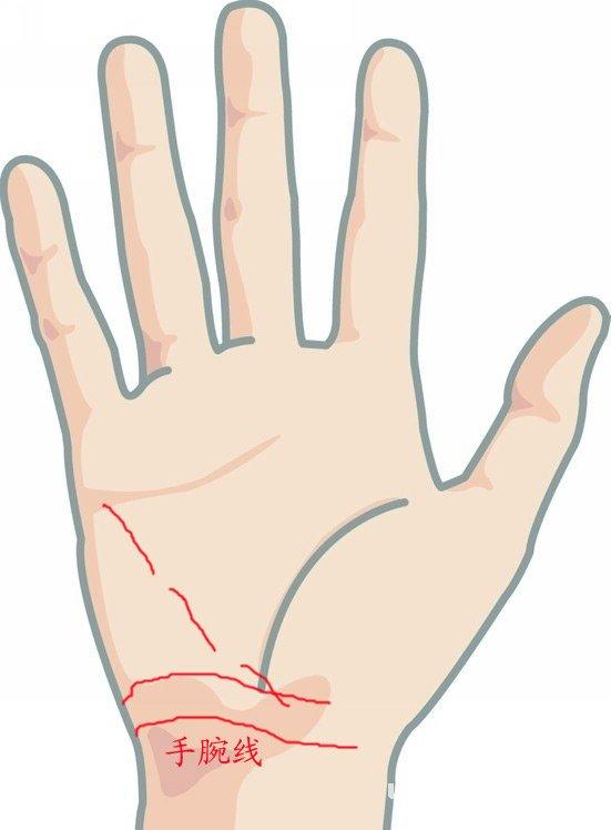 手腕线(动脉线)弯入手掌