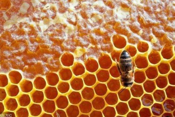 土蜂蜜应该如何保存呢?