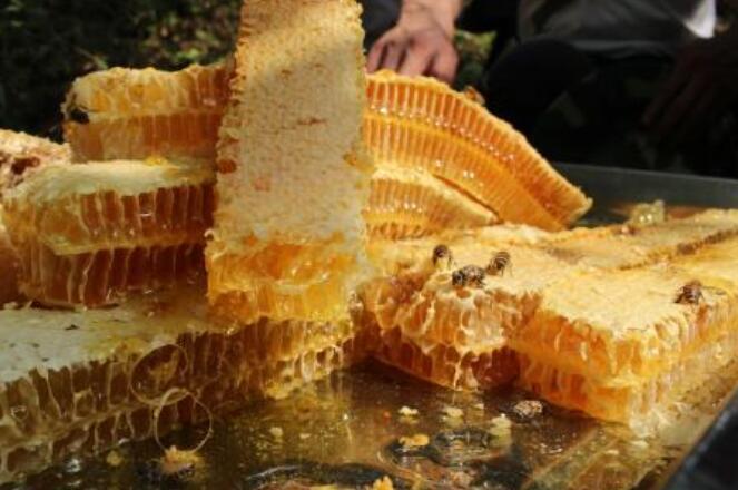 土蜂蜜怎么吃最好?