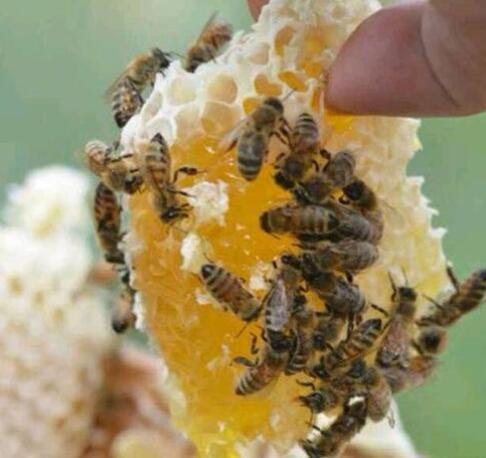女人长期喝土蜂蜜的好处
