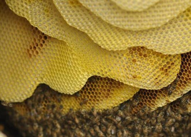 被土蜜蜂蛰了怎么处理?