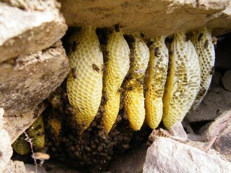 孕妇喝土蜂蜜的好处